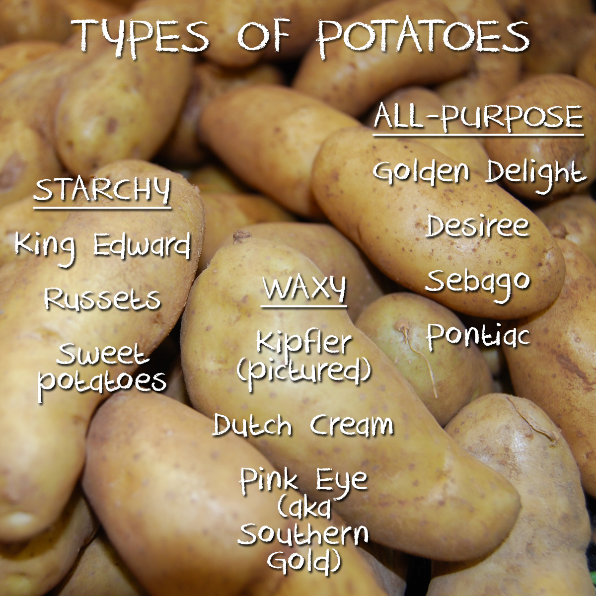 Types of potato - the super spud